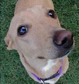 dog face close up Is Sniffing Out Dog Care Advice & Recommended Dog Supplies Making You Dog Tired?